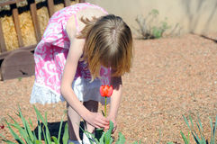 Girl picking a tulip. A young girl picking a red tulip in the garden Royalty Free Stock Image
