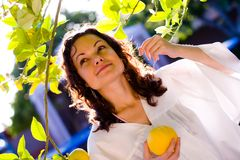 Girl picking up fresh fruit. Young woman picking up a fresh lemon from tree Royalty Free Stock Photography