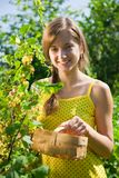 Girl is picking white currant Royalty Free Stock Images