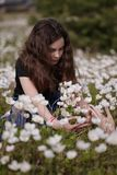 Girl picking white poppies Royalty Free Stock Photos