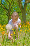 Girl picking wildflowers Royalty Free Stock Photography