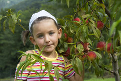 Girl picks peaches Royalty Free Stock Photography