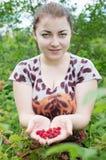 Girl picks raspberries Royalty Free Stock Photo