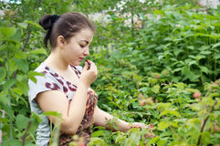 Girl picks raspberry Stock Photos