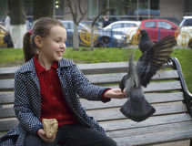 Girl and pigeons Royalty Free Stock Photos