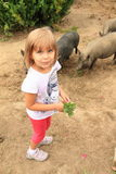 Girl with pigs Stock Images
