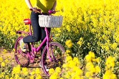 Girl with pink bike in the field of. Girl standing with pink bike in the field of yellow royalty free stock photography