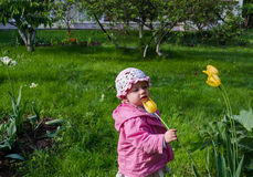 Girl with pink clothes smell yellow tulip garden Stock Photos