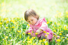Girl in pink dress with dandelion on green grass. Royalty Free Stock Image