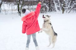 7263bbea233 ... pink jacket and hat playing and laughing with · Little girl playing  with a Siberian husky breed dog in the winter in the snow royalty