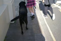 Girl plaid skirt walks dog. Girl in a plaid skirt and black shoes walking with big black dog down the street Stock Photography