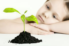 The girl and plant Stock Photo