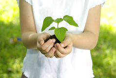 Girl with plant Stock Photo