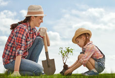 Girl plant sapling tree Stock Images