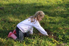 Girl planting. Little girl in ping wellingtons planting stock photo