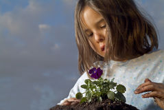 Girl planting. Young girl planting a pansy flower Stock Image