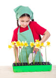 Girl planting daffodils on the desk Stock Photography