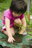 Girl planting seedling Stock Photos