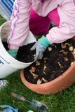 Girl planting tulips. Girl outside in the garden planting spring bulbs into container on fall Royalty Free Stock Photography