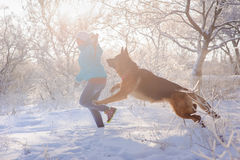 Girl play her German Shepherd dog. German Shepherd playing with toy and his mistress in winter sunny day. Girl walks her German Shepherd or dog on background of Stock Photo