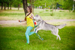 Girl play with husky dog Royalty Free Stock Photo