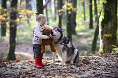 Girl play with husky and teddy bear on fresh air outdoor. Girl with dog in autumn forest Stock Photo