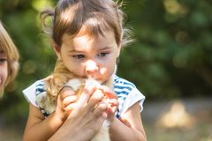 Girl play with kitten Stock Photo