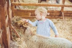 Girl play with the lamb on the farm.  Stock Photography