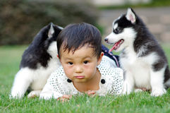 Girl play with puppy. A chinese girl play with two puppies Stock Photography