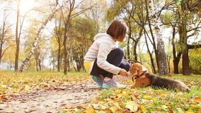 Girl playing with beagle puppy dog in autumnal park stock video footage