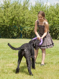 Girl playing with a big dog Royalty Free Stock Photo
