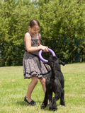 Girl playing with a big dog Stock Photos