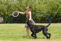 Girl playing with a big dog Stock Images