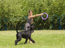 Girl playing with a big dog Stock Image