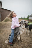 Girl playing with a Border Collie Royalty Free Stock Photo