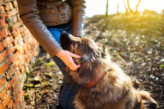 Girl playing with Caucasian shepherd dog, autumn. Young woman playing with Caucasian shepherd in a delightful spring day Royalty Free Stock Image