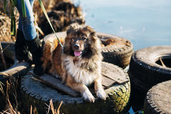 Girl playing with Caucasian shepherd dog, autumn. Young woman playing with Caucasian shepherd in a delightful spring day royalty free stock photo