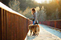 Girl playing with Caucasian shepherd dog, autumn. Young woman playing with Caucasian shepherd in a delightful spring day royalty free stock photography