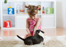 Girl playing with chihuahua pet dog indoor. Child girl playing with chihuahua pet dog indoor Stock Photos