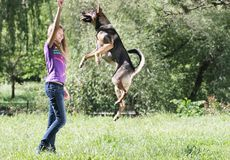 Girl playing with dog outdoors Stock Image