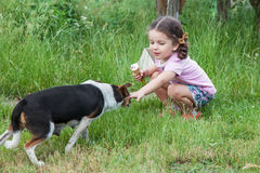Girl playing with dog outdoors Royalty Free Stock Images