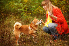 Girl playing with a dog Shiba Inu in autumn park. Royalty Free Stock Photos