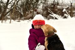 The girl is playing with the dog in the snow and gives him a kiss. The dog jumps for joy at the girl and licks her face stock image