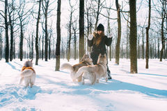 Girl playing with dogs in snow Stock Images