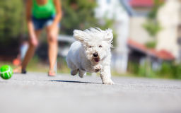 Girl playing fetch with dog stock images