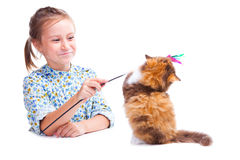 Girl playing with funny tortoise British kitten Royalty Free Stock Image