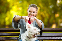 Girl playing with her dog in autumn park stock photography
