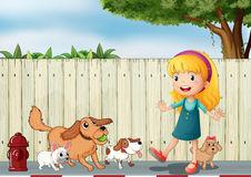A girl playing with her dogs Royalty Free Stock Images