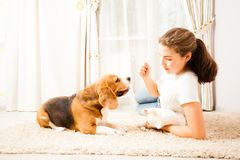 The girl is playing with her pets Royalty Free Stock Photo