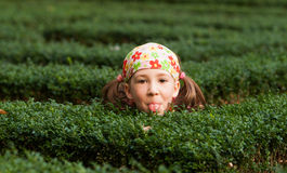 Girl playing hide and seek Stock Photo